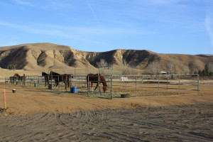 Pipe corrals occupied by horses