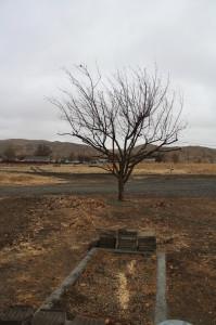 Winter fruit tree in light rain with hills